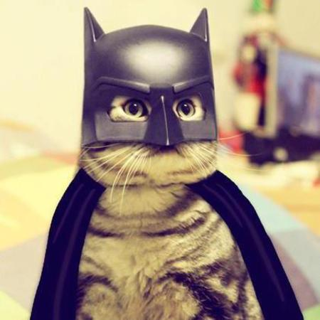[Image: batman_cat_costume.jpg]
